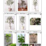 樹木 (2)