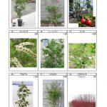 樹木 (3)