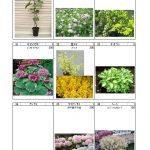 樹木 (4)